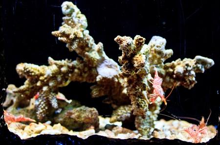 aquarium  Coral Stock Photo - 18425141