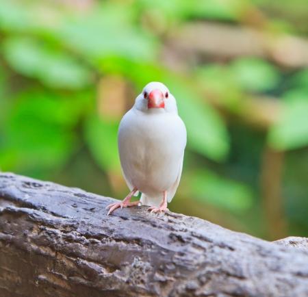 Small birds photo