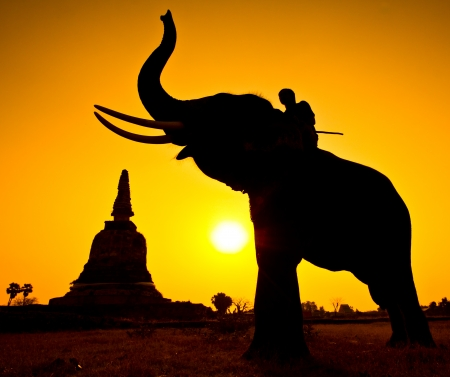 Elephant silhouettes in rural Ayutthaya Province Thailand  Stock Photo