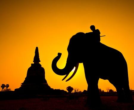 ayuttaya: Elephant silhouettes in rural Ayutthaya Province Thailand  Stock Photo