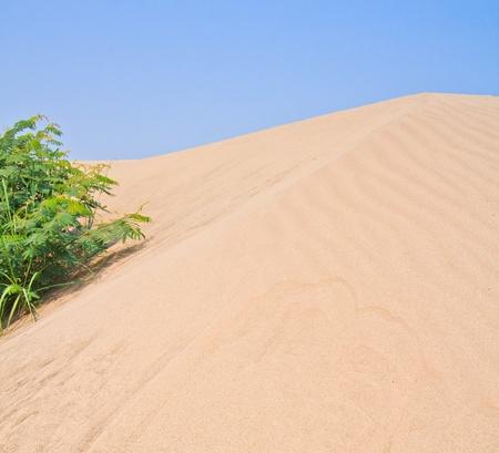 Desert Stock Photo - 19065450