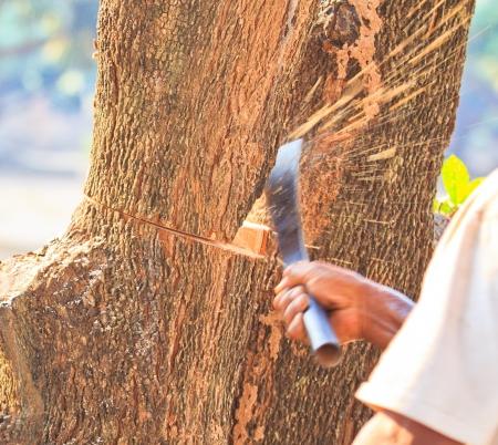 logger: Logger man cutting wood