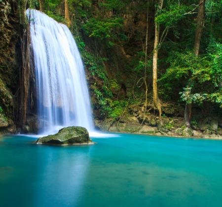 the cascade: Cascada en el bosque