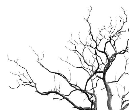 arboles secos: Los ?rboles muertos