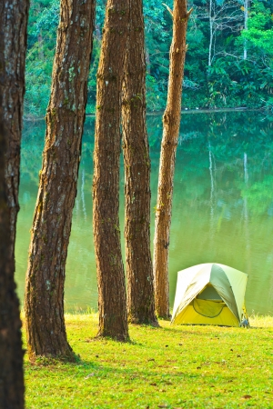 irradiate: Camping in the forest pine  Stock Photo
