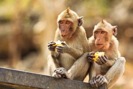 monkey asia thailand Stock Photo