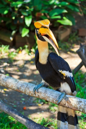 largest tree: Hornbill Stock Photo