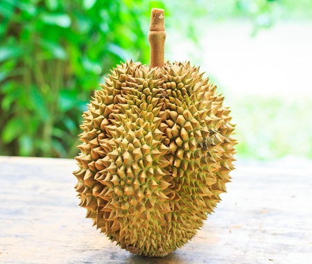 Durian Tropical fruits asia thailand  photo