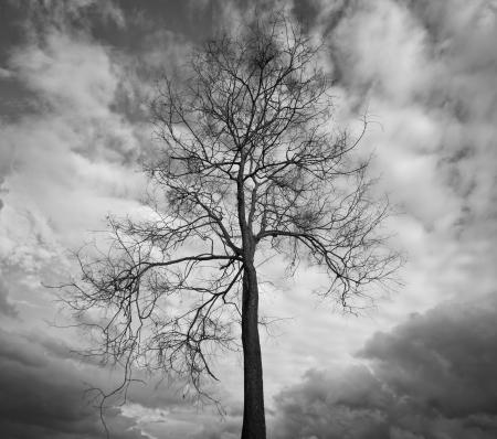 toter baum: Tote Bäume in Wald-und Dschungel-Hintergrund Lizenzfreie Bilder