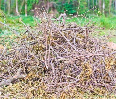 Pile of firewood dry wood  photo