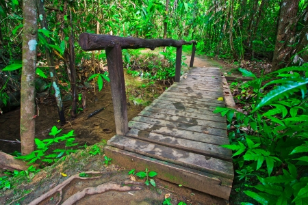 Wooden bridge across the canal in Forest  photo