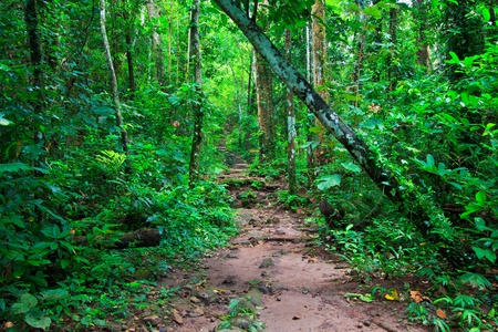 Tropical trail in dense rainforest self-guided trails thailand  photo