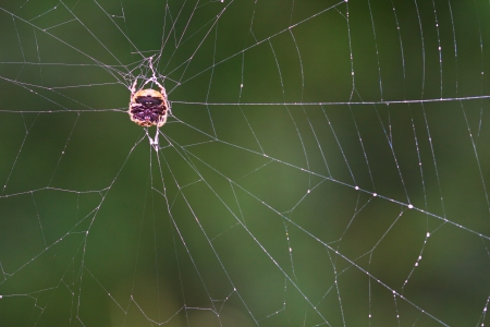 Spider tropical zone Pang Sida National Park thailand  photo