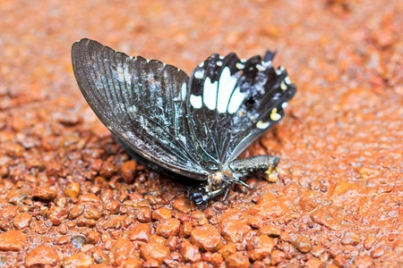 Butterfly in pang sida national park sa kaeo province asia thailand photo