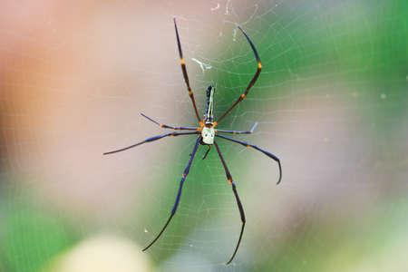 Macro closeup Spider in the wild asia thailand  photo
