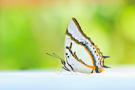 Butterfly macro background asai thailand  photo