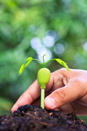 step of growing tree seed sprout tree  photo