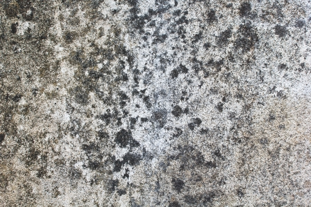 sand mold: Fungi texture background stain of a paint on wall mortar Stock Photo