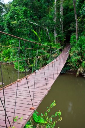 Suspension bridge across the water in the forest  photo