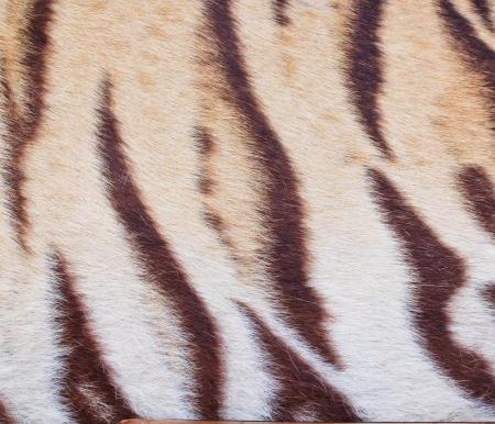 yello: beautiful tiger fur - colorful texture with orange, beige, yello
