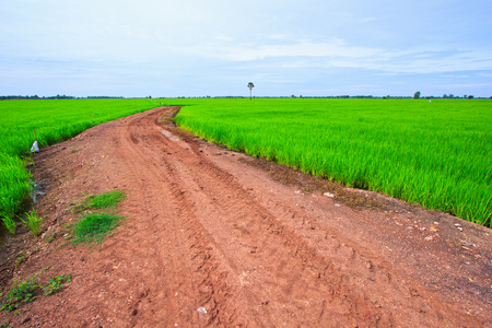 Filed rice in thailand and the country road  photo