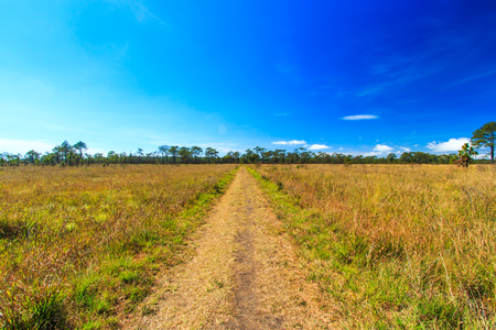 kradueng: Meadow Path in Phu Kradueng National Park Asia Thailand Stock Photo