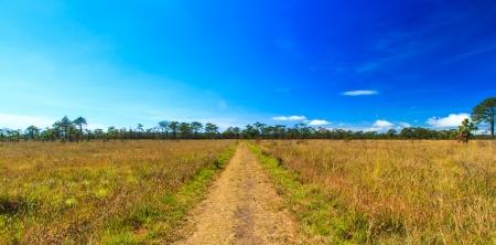 kradueng: Meadow Path in Phu Kradueng National Park Asia Thailand Stock Photo