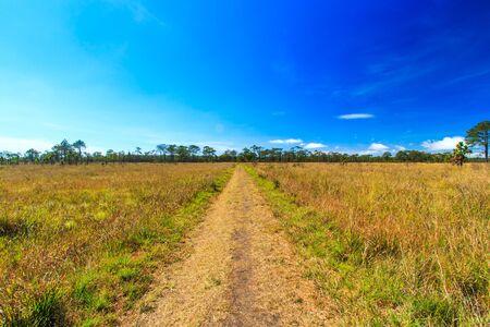 kradueng: Meadow Path in Phu Kradueng National Park Asia Thailand