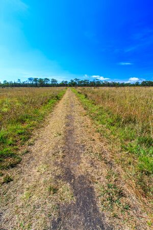 kradueng: Meadow Path in Phu Kradueng National Park Asia Thailand