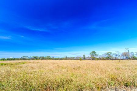 phukradueng: Meadow landscape grassland in phukradueng national park ,Asia Thailand  Stock Photo