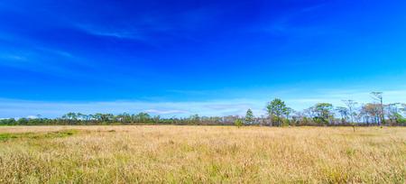 grassfield: Meadow landscape grassland in phukradueng national park ,Asia Thailand  Stock Photo