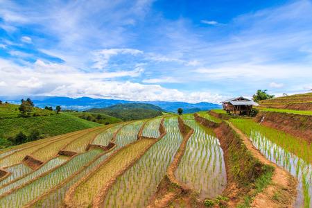 Paddy - rice fields at pa pong peang chiang mai asia Thailand photo