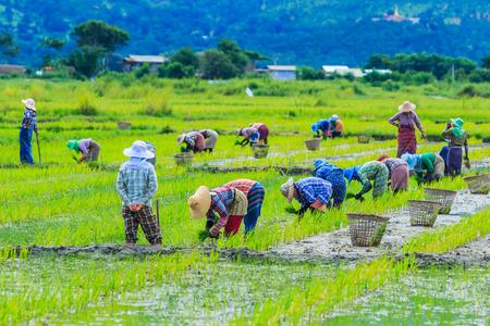 Farmer in village Inlay Myanmar photo
