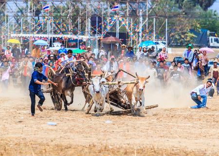 PHETCHABURI - FEBRUARY 22 : 143rd Cow Racing Festival on February 22, 2014. Phetchaburi, Thailand. Cow Racing is the traditional festival in Phetchaburi.