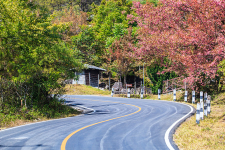 Road wayside have cherry blossom and sakura photo
