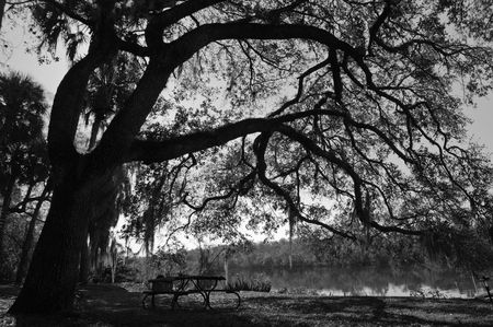 with white: Black and white landscape in Southwest Florida Stock Photo
