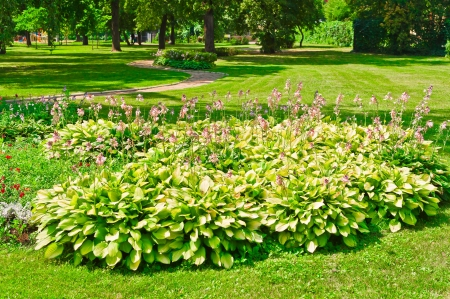 Flower bed in park, Moscow, Russia, East Europe photo