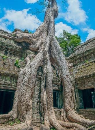 Big Banyan Tree Growing Over Ta Prohm Temple, Angkor Wat, Cambodia, Southeast Asia Stock Photo