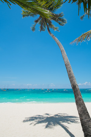 Tropical White Sand Beach with Coconut Palm, Boracay Island, Philippines