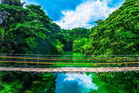 jungla: Bambú puente colgante peatonal sobre el río en la selva, Bohol, Filipinas Foto de archivo