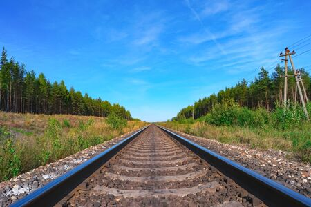 both sides: Railroad track with green forest on both sides