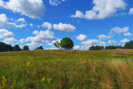 Summer landscape with grass, trees, sky and clouds Stock Photo