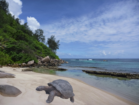 beach landscape: Tropical beach and gigantic turtle. Sea bay scenery. Aldabra giant tortoise. Scenic landscape with sandy beach, sea, Praslin island, Seychelles, Indian Ocean. Popular tourist destination of Africa
