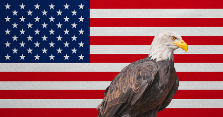American flag and Bald Eagle. National symbols of USA. Patriotic US banner, emblem, background. Flag of the United States of America with real detailed fabric texture. American national official flag