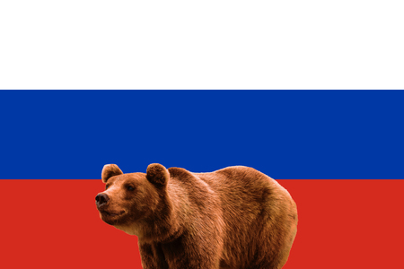 Flag of Russia and russian brown bear. National patriotic symbols of Russia. Bear on the background of Russian flag. World stereotype. The national animal of Russia is the Brown bear, Ursus arctos