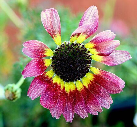 bella: Nizza fiore multicolore