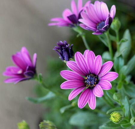 gentle: Gentle spring flower