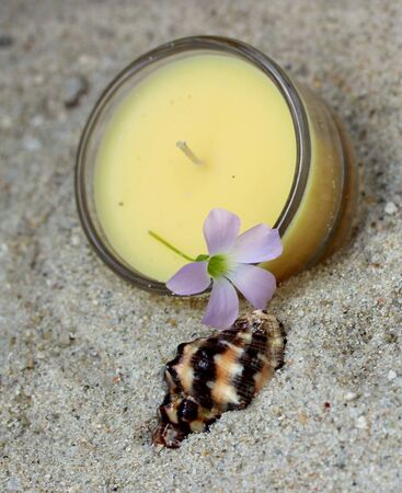 delicate: candle, seashell and delicate flower