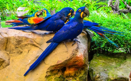 group of colorful macaw birds on the stone Stock Photo - 21576573