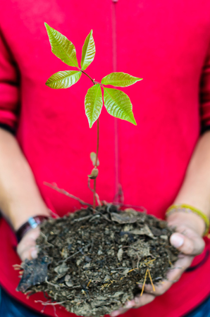 Two hands holding a green young plant  Symbol of new life and environmental conservation Stock Photo - 23015977